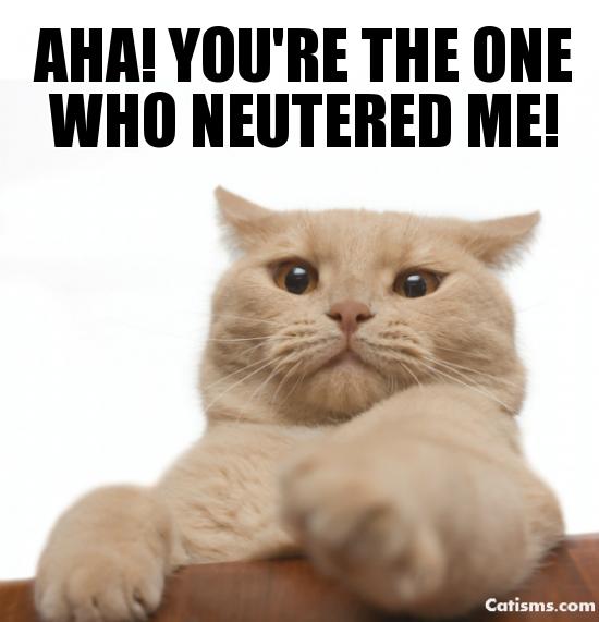 Why neuter a cat