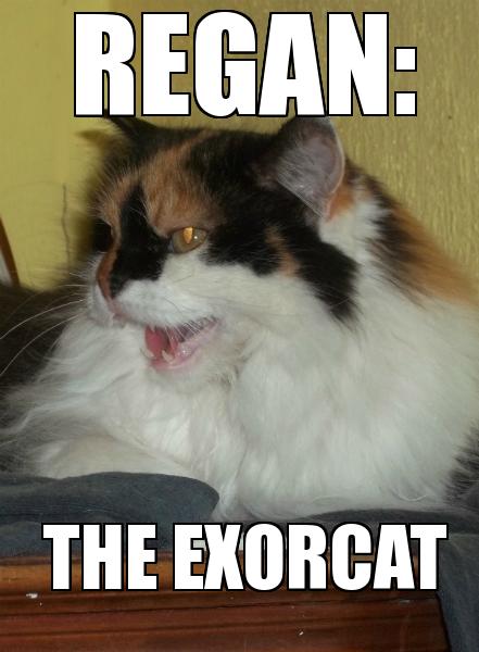 exorcat