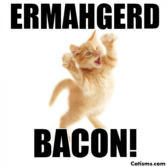 omg-bacon-cat