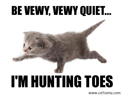 vewy_quiet_kitten